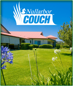 Nullarbor Couch Premium Couch From Daleys Turf Sunshine Coast