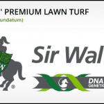 Turf Varieties - Sir Walter
