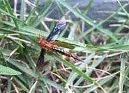 Ike Newman Wasp