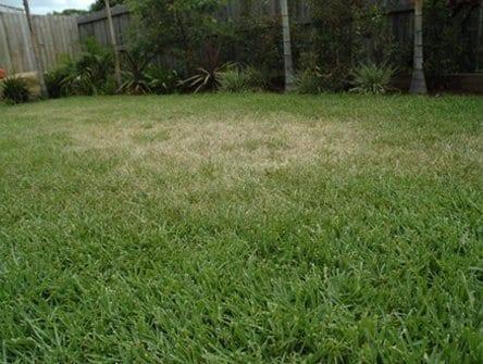Dry spots in lawn