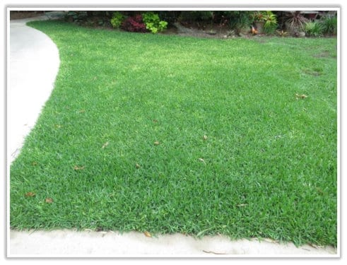 Lawn Turning White