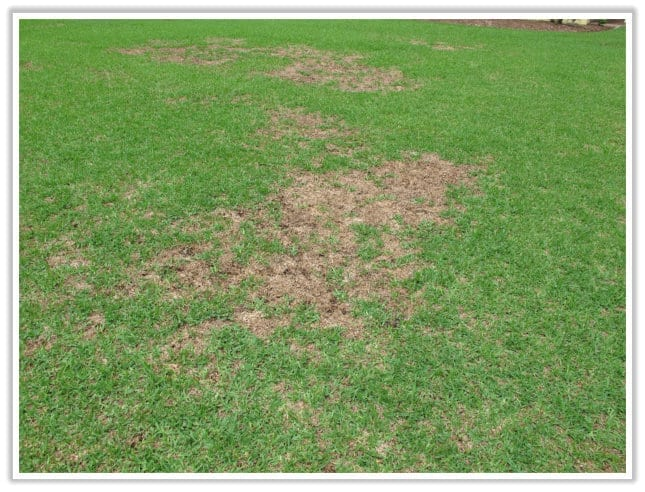 Lawn Issue