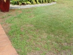 Lawn Recovery