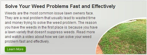 Lawn Weeds